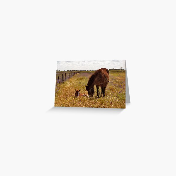 Gypsy and Foal Greeting Card