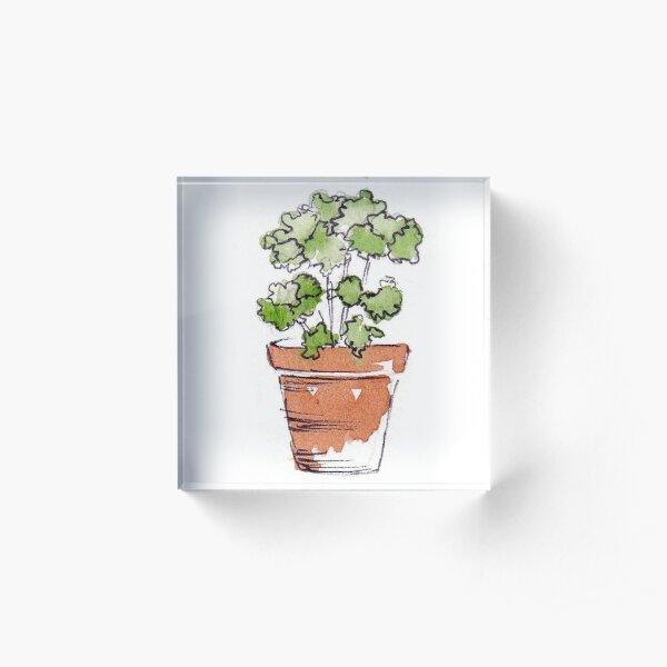 Herbs in pots - Parsley  Acrylic Block