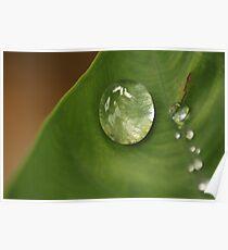 morning dew on leaf Poster