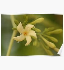 Papaya Flower Poster