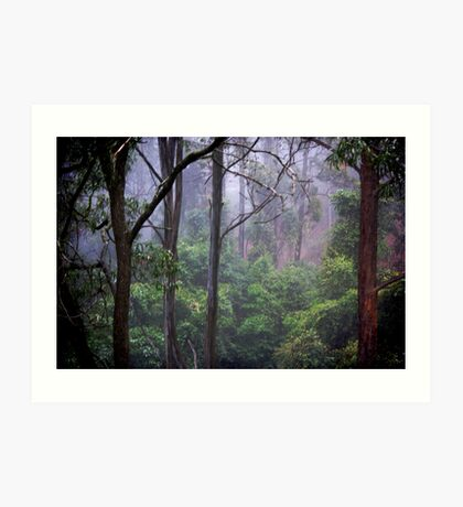 hidden in a misty forest Art Print