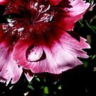 Rain Drops And Petals by MaeBelle