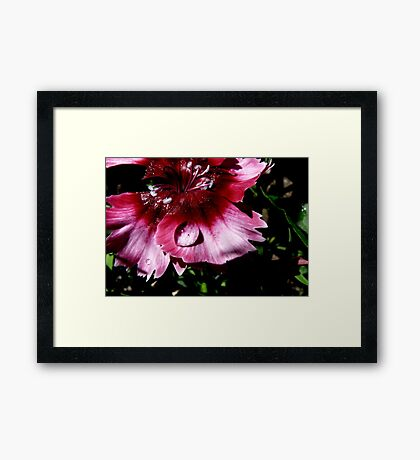 Rain Drops And Petals Framed Print