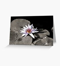Water Lily ~ I Stand Here Alone and Yet Strong Greeting Card