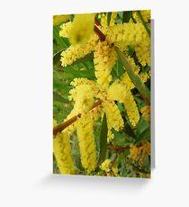 acacia branches Greeting Card