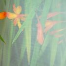 Reflections of summer by Photos - Pauline Wherrell