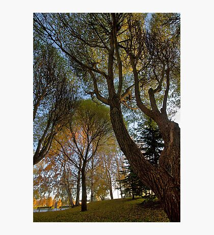 Seats under the big trees Photographic Print
