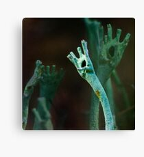 Clapping, or... Canvas Print