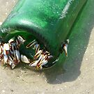 Barnacles on the Beach by DottieDees