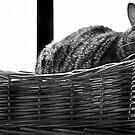 Heaven is a cat Basket  by Greig Nicholson