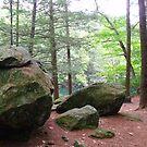 Collecting Rocks? by CarolLeesArt