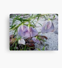 Butterfly Pea - a species of Clitoria Metal Print