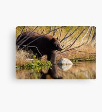 Cinnamon Bear Canvas Print