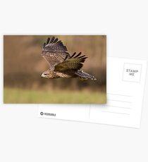 Buteo buteo Postcards