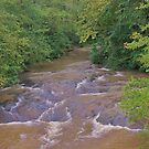 The Creek at Stovall Mill by Chelei