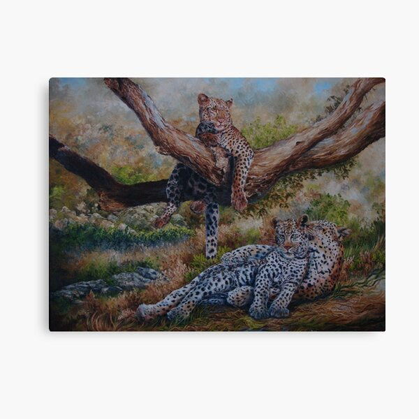 Leopards taking a rest Canvas Print
