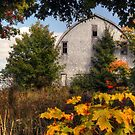 Fall Barn by Amanda White