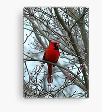 Cardinal in Winter Canvas Print