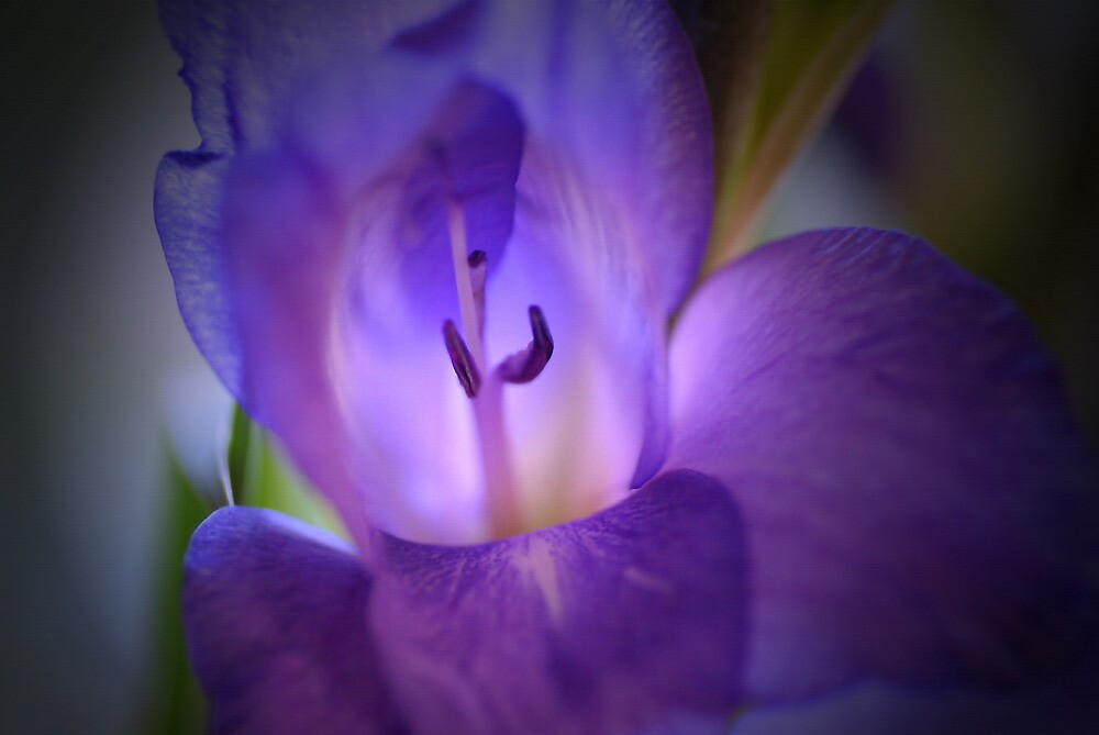 Purple Gladiola by walstraasart
