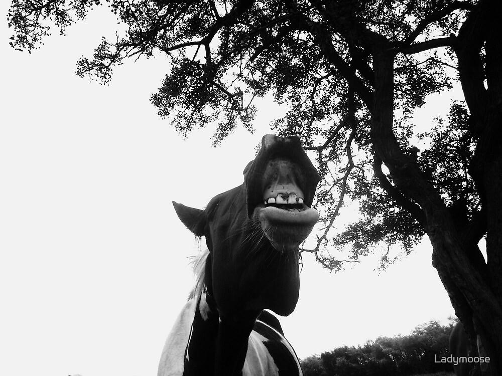 Laaarrrrrr by Ladymoose