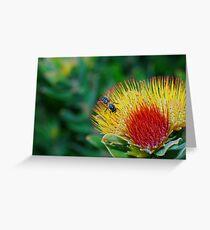 'Beehaviour' Greeting Card