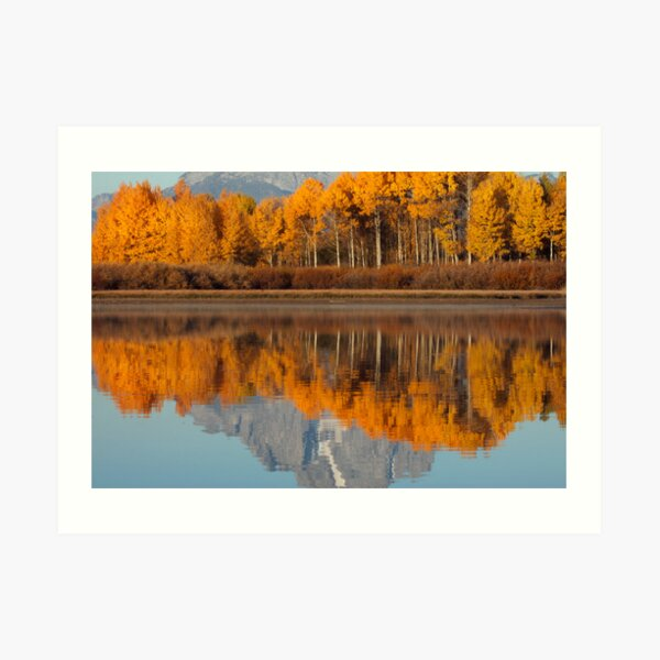 Aspen Grove Aflame At The Oxbow Art Print