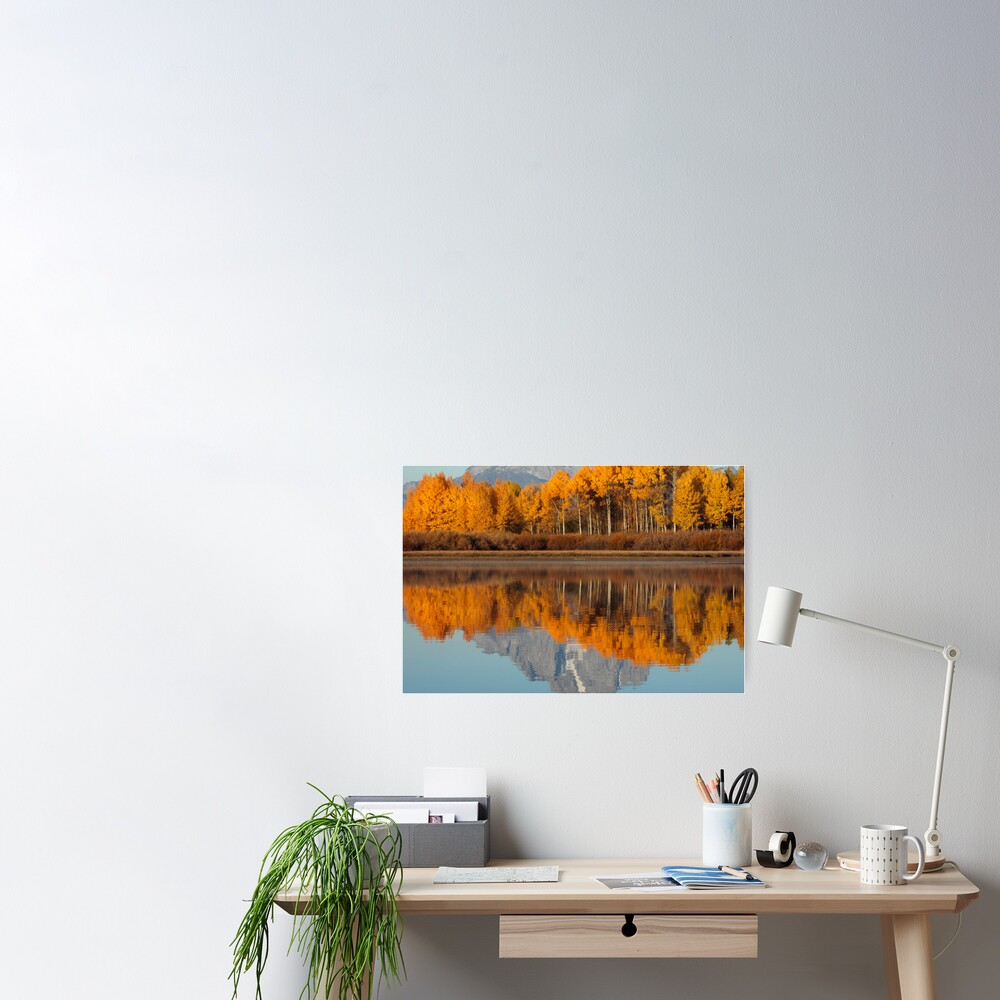 Aspen Grove Aflame At The Oxbow Poster