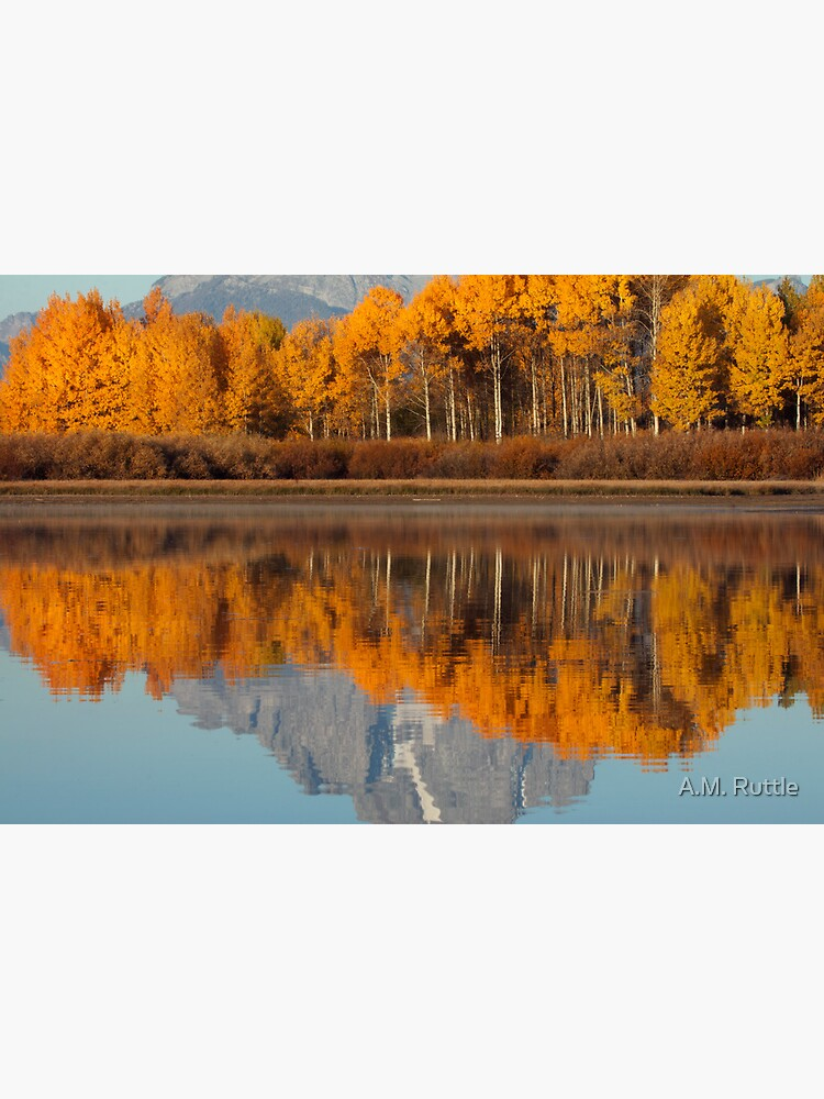 Aspen Grove Aflame At The Oxbow by annruttle