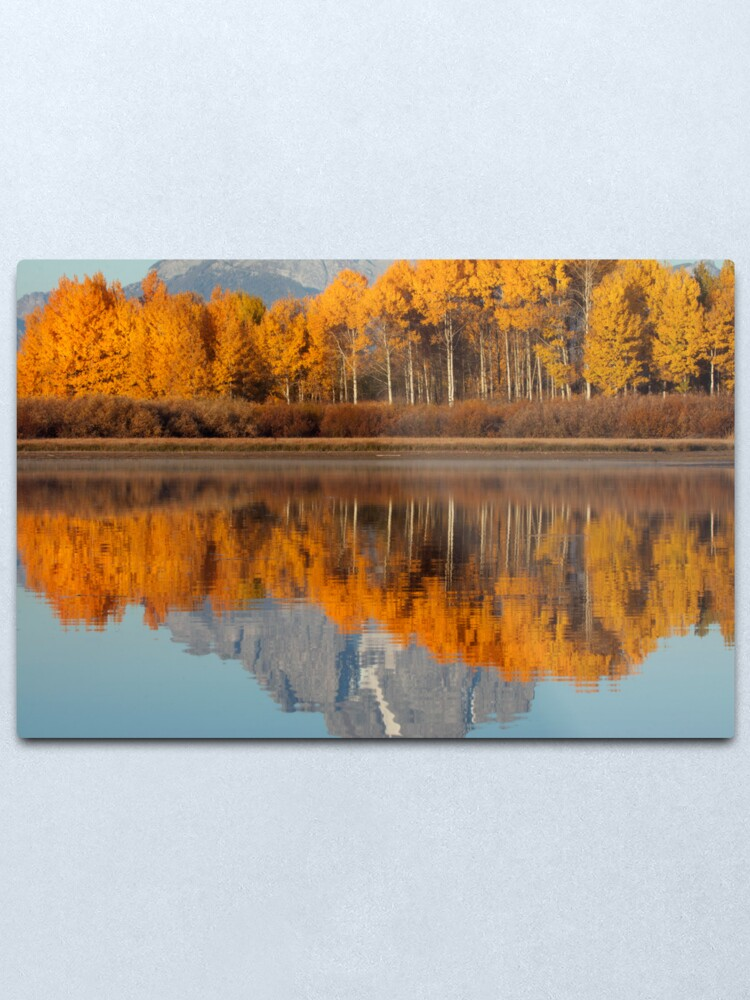 Alternate view of Aspen Grove Aflame At The Oxbow Metal Print