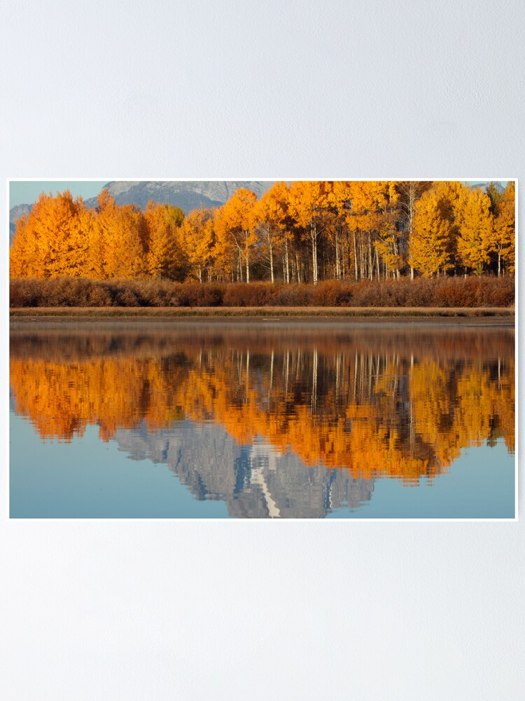 Alternate view of Aspen Grove Aflame At The Oxbow Poster