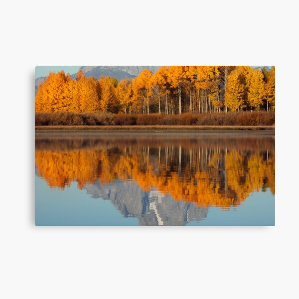 Aspen Grove Aflame At The Oxbow Canvas Print