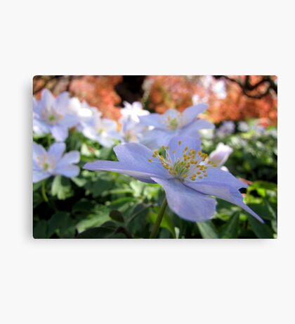 Delicate hues of spring Canvas Print