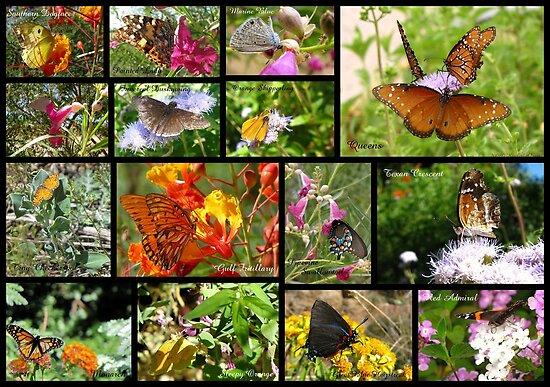 Butterflies in Arizona ~ Poster by Kimberly Chadwick