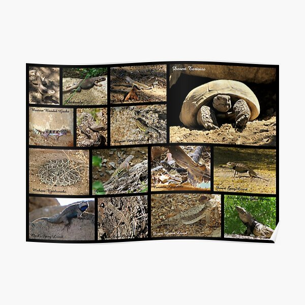 Commonly Seen Arizona Reptiles ~ Poster Poster