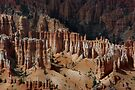 Among the Hoodoos ~ Bryce Canyon, Utah USA by Vicki Pelham