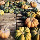 Scattered Pumpkins by Allison  Flores