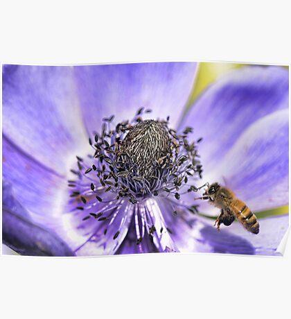 Anenome Bee-port Poster