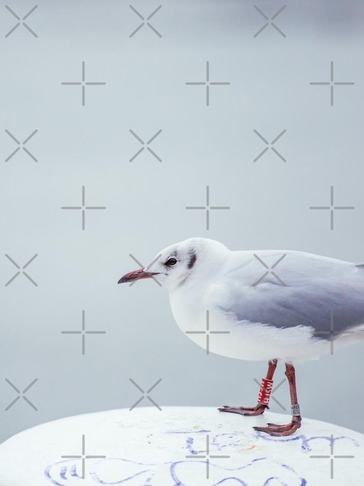 Seagull on bollard by nobelbunt