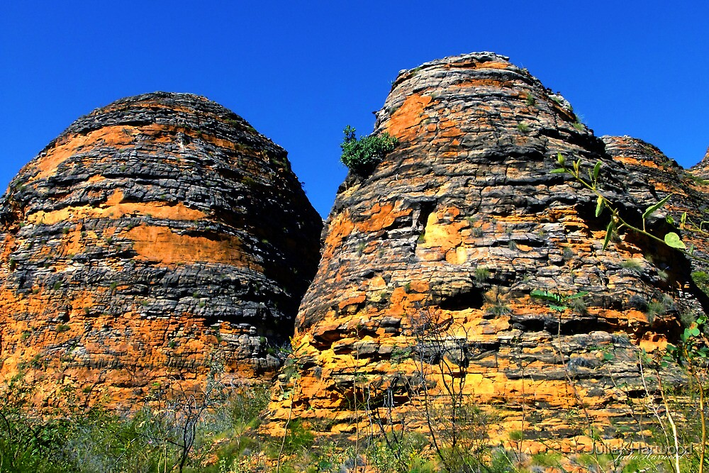 Bungle Bungles by Julia Harwood
