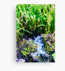 water source Canvas Print