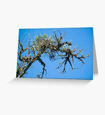 Treehuggers Greeting Card