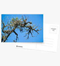 Treehuggers Postcards