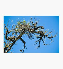 Treehuggers Photographic Print