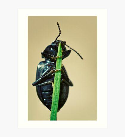 Hidden Beetle Art Print