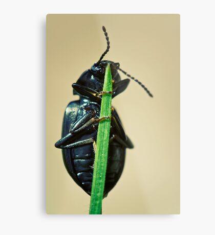 Hidden Beetle Metal Print