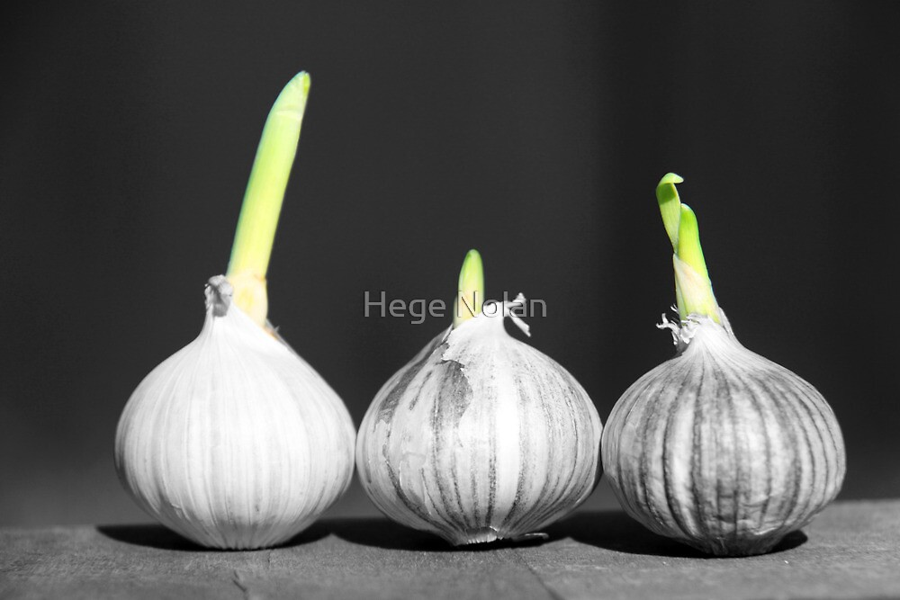 Shallot Sprouting by Hege Nolan