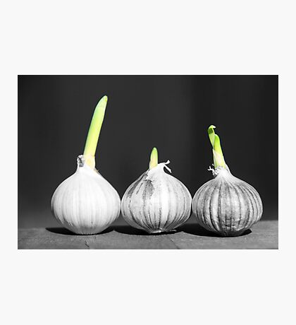 Shallot Sprouting Photographic Print