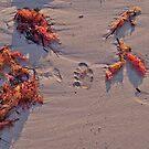 Footprint fun... by Teacup