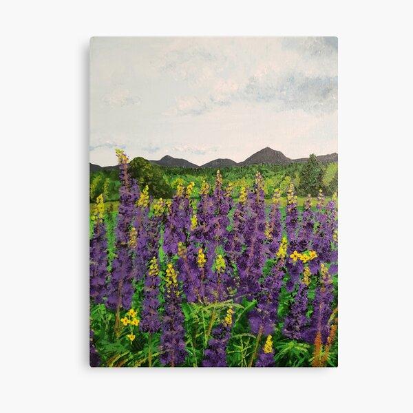 Vermont Lupines Canvas Print