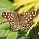 Spotted  Brown by AnnDixon